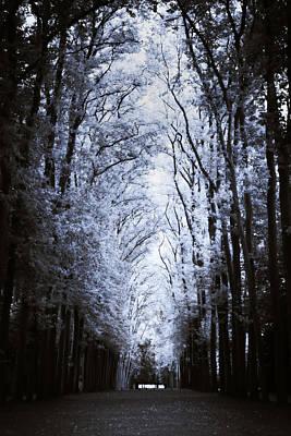 Photograph - Canopy by RicharD Murphy