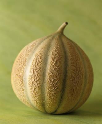 Cantaloupe Photograph - Cantaloupe Melon by Veronique Leplat