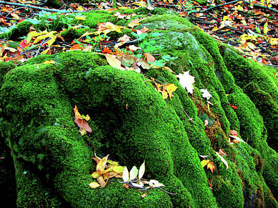 Mixed Media - Canterbury Hills Moss In Autumn by Bruce Ritchie