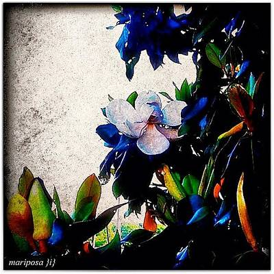 Edit Photograph - Canvas Magnolia by Mari Posa