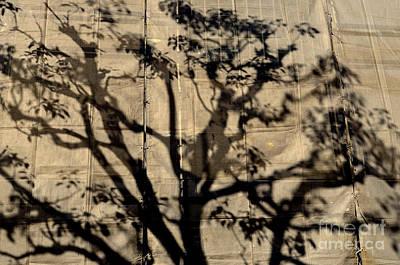 Photograph - Canvas Print by Dean Harte