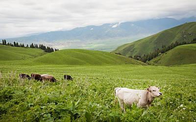 Kyrgyzstan Photograph - Canyon Chon-kemin  by Konstantin Dikovsky