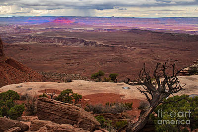 Photograph - Canyonland Overlook by Robert Bales