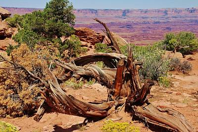 Art Print featuring the photograph Canyonlands 2 by Dany Lison
