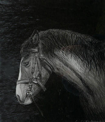 Horse Portrait Drawing Drawing - Capall Doracha by Tomas OMaoldomhnaigh