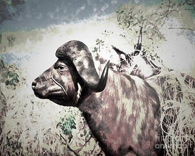 Cape Buffalo Print by Arne Hansen