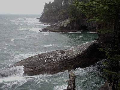 Cape Flattery Shoreline Art Print by Fred Russell