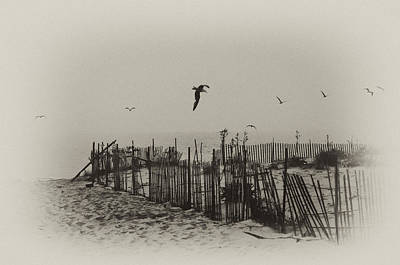 Seagull Digital Art - Cape May Morning by Bill Cannon