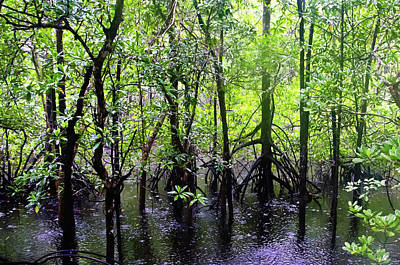 Photograph - Cape Tribulation Rain Forest Mangroves by Harry Strharsky