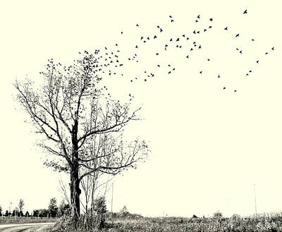 Capistrano Cowbirds Original