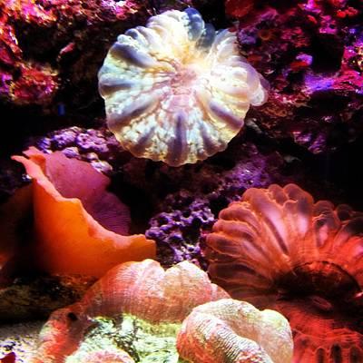 Photograph - Captivating Coral by Lora Mercado