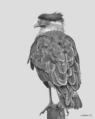 Caracara Art Print by Larry Linton