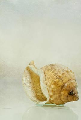 Conch Photograph - Caracola 2 by Vicente Gonzalez
