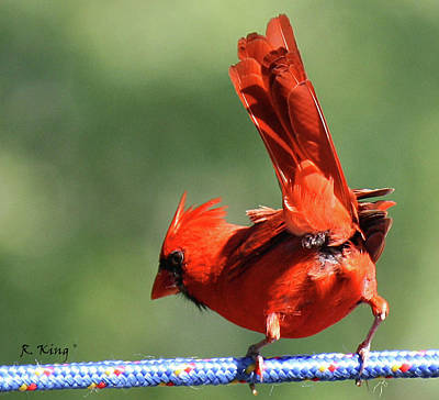 Photograph - Cardinal-a Picture Is Worth A Thousand Words by Roena King