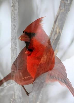 Cardinal Collage Art Print by Rick Rauzi