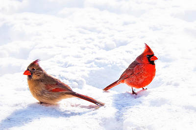 Photograph - Cardinal Couple by Tamyra Ayles