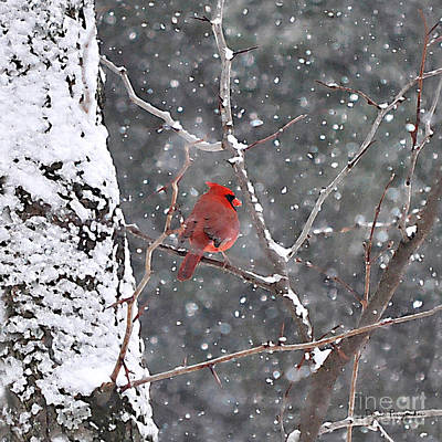 Cardinal In Winter Original by David Pennypacker
