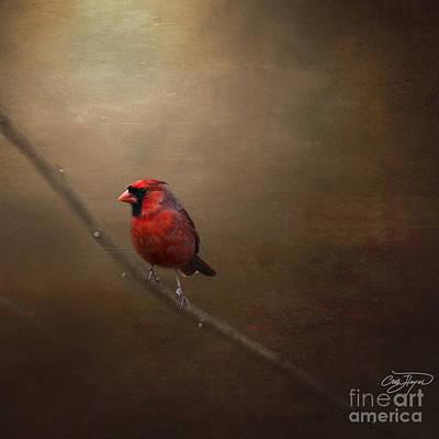 Cardinal Old Master - Artist Cris Hayes Art Print