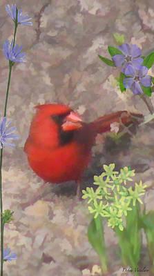 Cardinal Springtime Art Print by Debra     Vatalaro