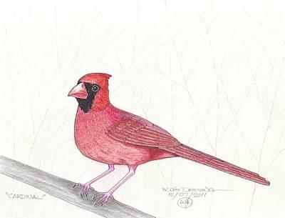 Cardinal Art Print by William Deering