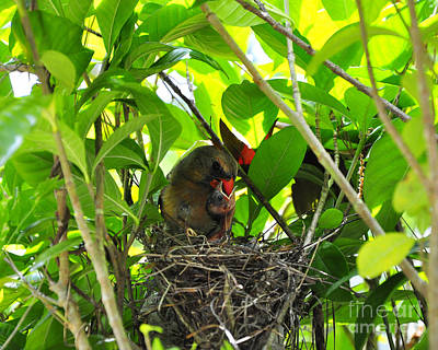 Baby Bird Photograph - Cardinals Caterpillars by Al Powell Photography USA