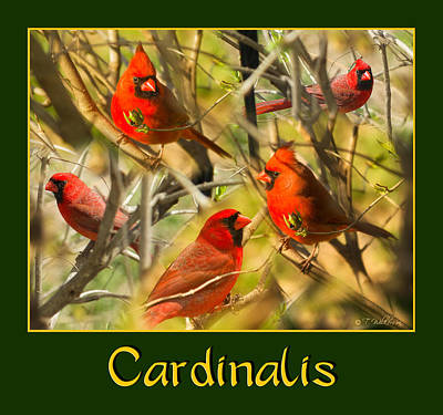 Photograph - Cardinals In The Mist by Trudy Wilkerson