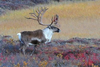 Photograph - Caribou Proud by Alan Lenk