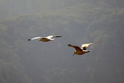Photograph - Carmel Birds In Flight  by Harvey Barrison
