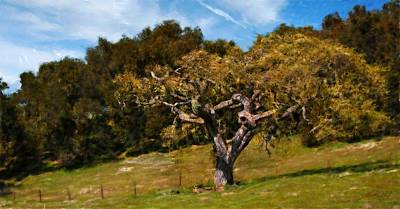 Photograph - Carmel Valley Spring 2012 One by Jim Pavelle