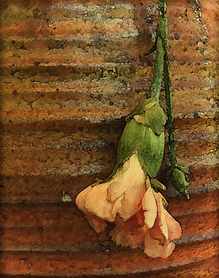 Photograph - Albuquerque, New Mexico - Carnation by Mark Forte