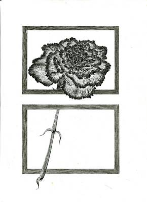 Carnation Drawing - Carnation by Michael Compton