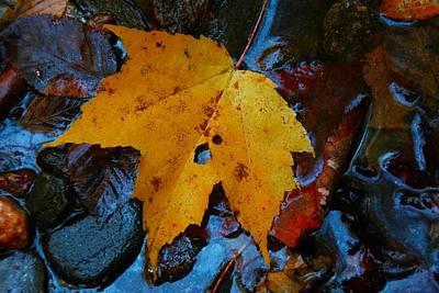 Photograph - Carolina Blue Reflections by Christine Annas