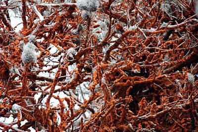 Photograph - Carotene Algae by Harvey Barrison