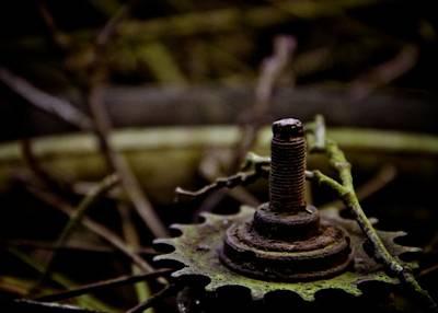 Forest Floor Photograph - Carousel by Odd Jeppesen