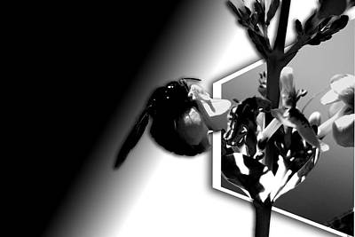 Photograph - Carpenter Bee 2 by Elizabeth  Doran