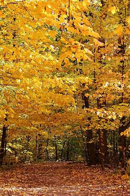 Oregon Illinois Photograph - Carpet Of Leaves Marks The Path by Bruce Bley