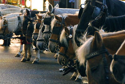 Photograph - Carriage Horses by Anthony Citro