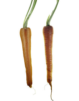 Carrot Art Print by Nathaniel Kolby