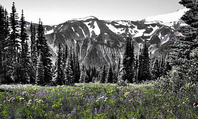 Photograph - Cascade Range Meadow by David Patterson