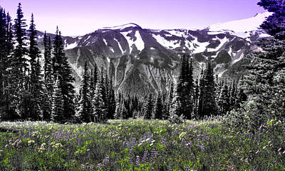 Photograph - Cascade Range Meadow II by David Patterson