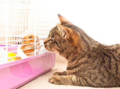Tabby Photograph - Cat And Hamster by Tom Gowanlock
