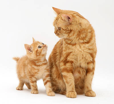 Photograph - Cat And Kitten by Jane Burton