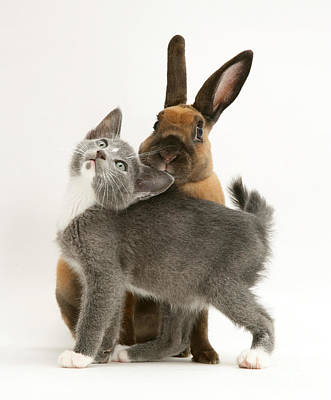Photograph - Cat And Rabbit by Jane Burton