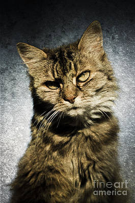 Photograph - Cat Asks Question by David Lade