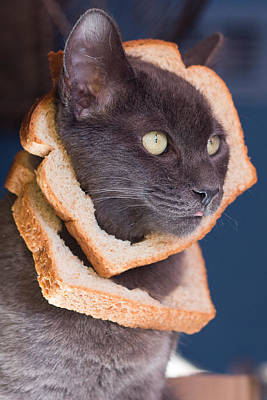 Cat Breading Sandwich  Art Print by Kittysolo Photography
