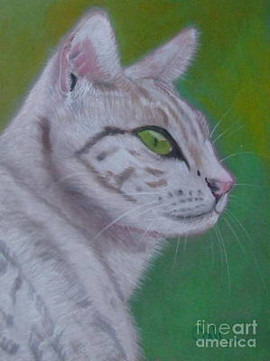 Pastel - Cat by Calliope Thomas