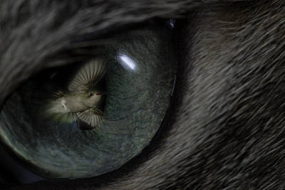 Photograph - Cat Daydream by Gregory Scott