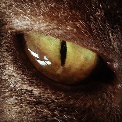 Eye Photograph - Cat Eye by Cameron Bentley