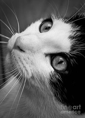 Photograph - Cat Eyes by Cheryl Baxter