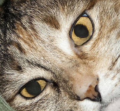 Photograph - Cat Eyes Close Up by Michael Waters